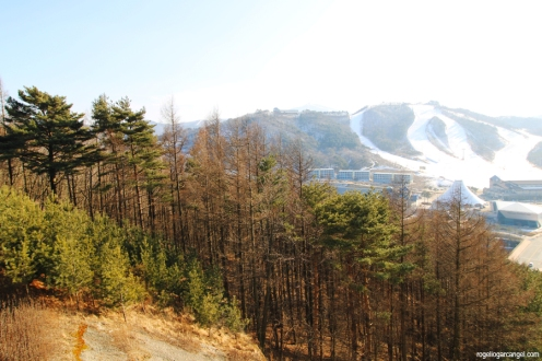 Alpensia Ski Resort (South Korea)